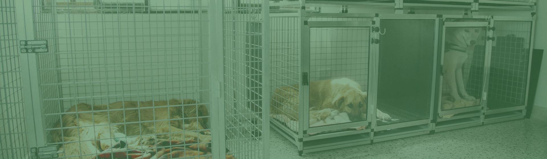 veterinaria-san-antonio-24-horas